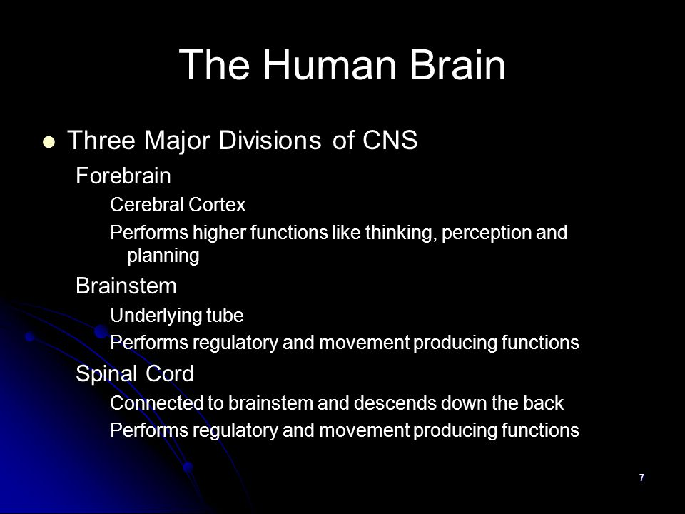 7 The Human Brain Three Major Divisions of CNS Forebrain Cerebral Cortex Performs higher functions like thinking, perception and planning Brainstem Underlying tube Performs regulatory and movement producing functions Spinal Cord Connected to brainstem and descends down the back Performs regulatory and movement producing functions