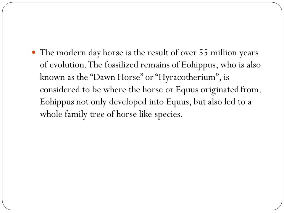 The modern day horse is the result of over 55 million years of evolution.