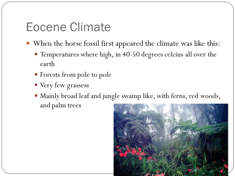 Eocene Climate When the horse fossil first appeared the climate was like this: Temperatures where high, in 40-50 degrees celcius all over the earth Forests from pole to pole Very few grassess Mainly broad leaf and jungle swamp like, with ferns, red woods, and palm trees