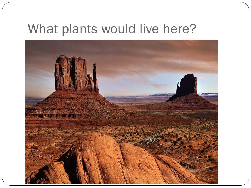 What plants would live here