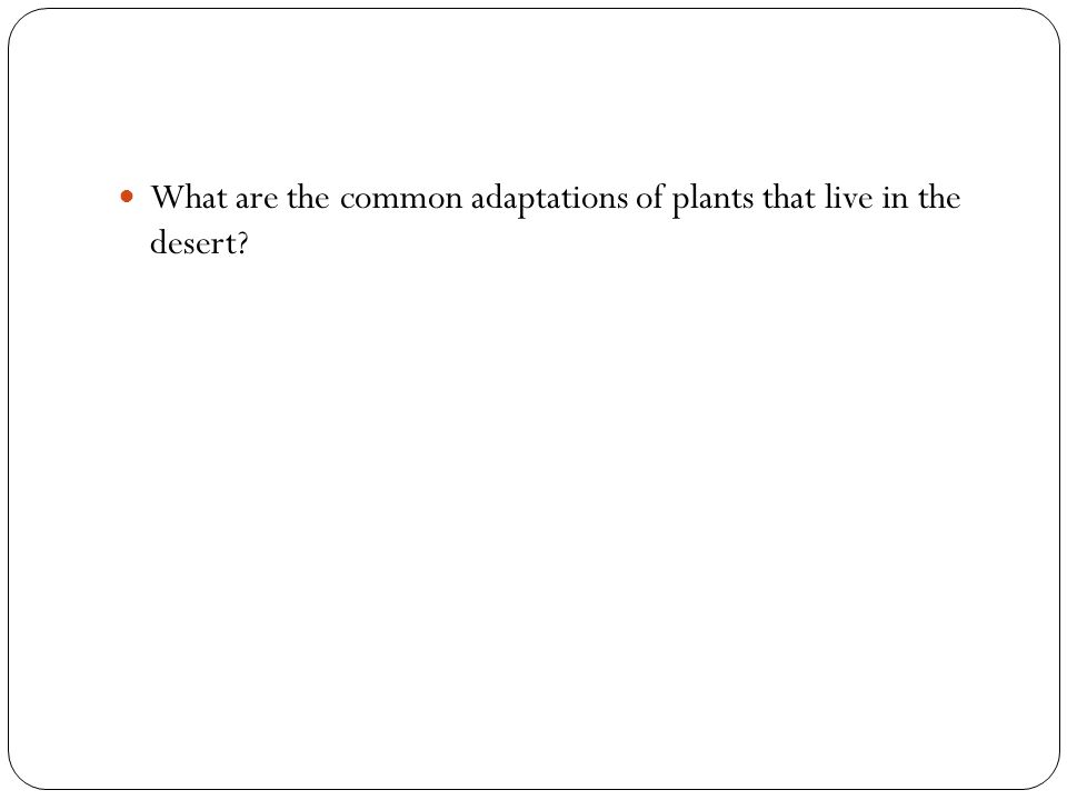 What are the common adaptations of plants that live in the desert