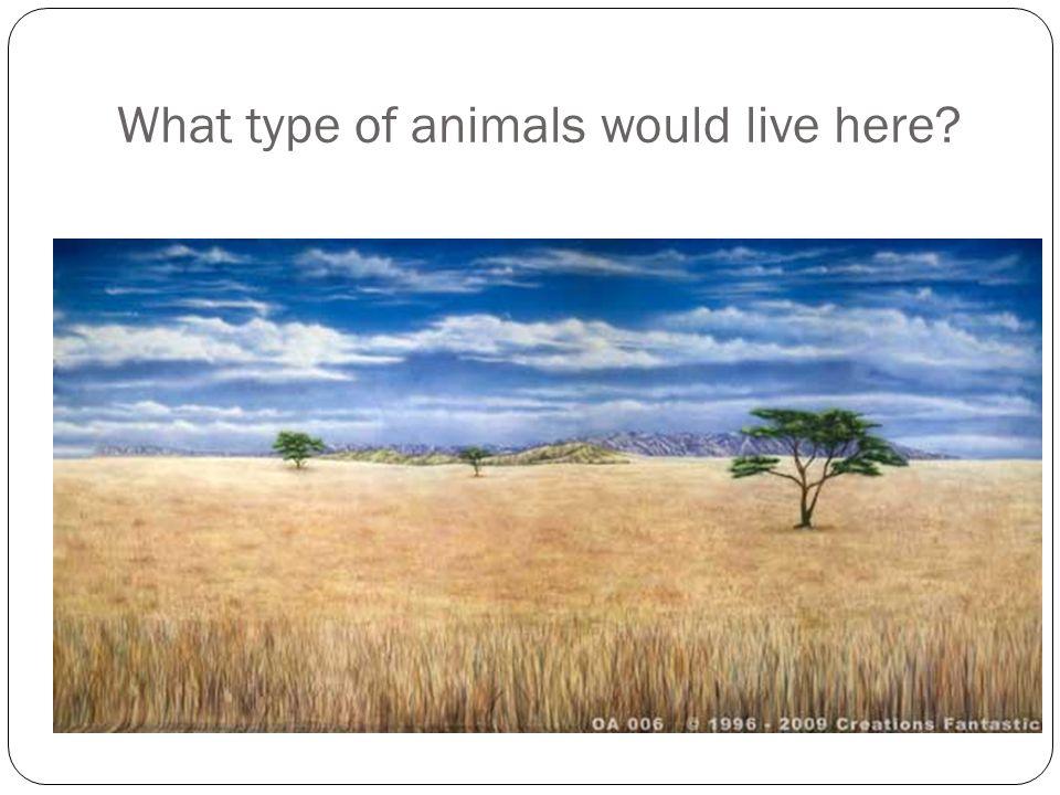 What similar adaptations do animals of the savannah display?
