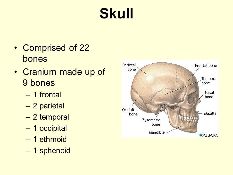 Skull Comprised of 22 bones Cranium made up of 9 bones –1 frontal –2 parietal –2 temporal –1 occipital –1 ethmoid –1 sphenoid