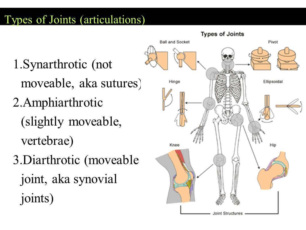 Types of Joints (articulations) 1. Synarthrotic (not moveable, aka sutures) 2.