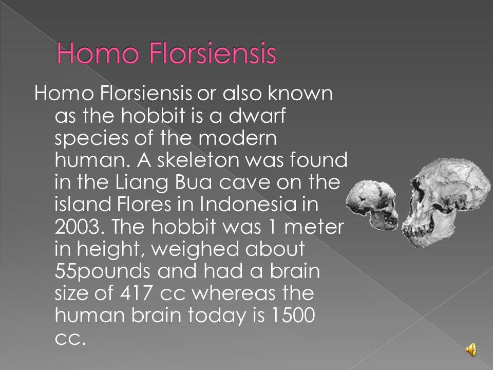 Homo Florsiensis or also known as the hobbit is a dwarf species of the modern human.