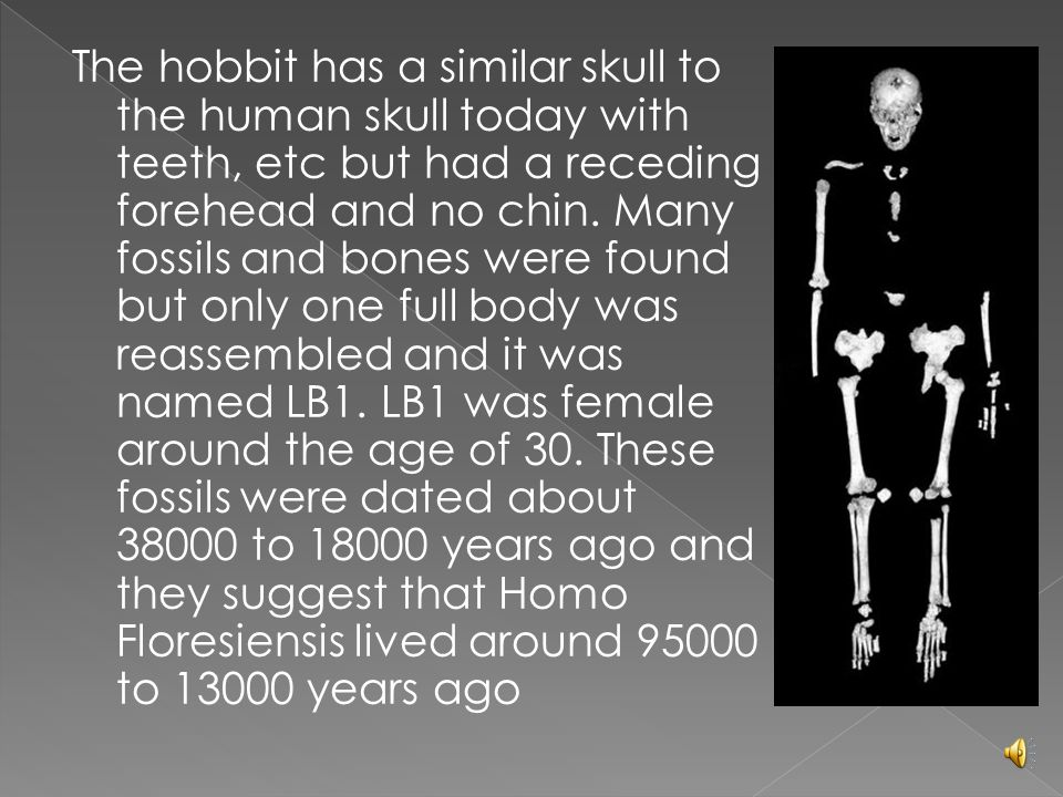 The hobbit has a similar skull to the human skull today with teeth, etc but had a receding forehead and no chin.