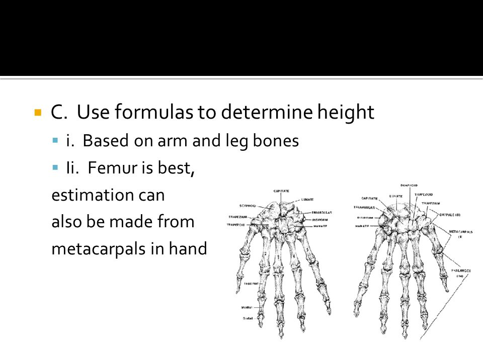  C. Use formulas to determine height  i. Based on arm and leg bones  Ii.