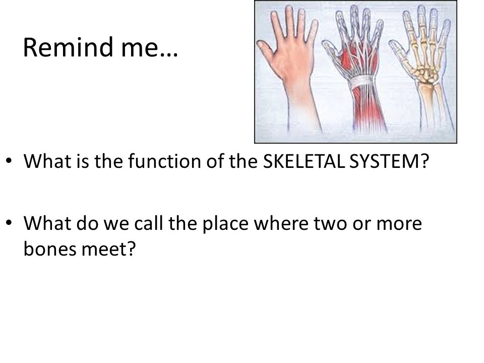 Remind me… What is the function of the SKELETAL SYSTEM.