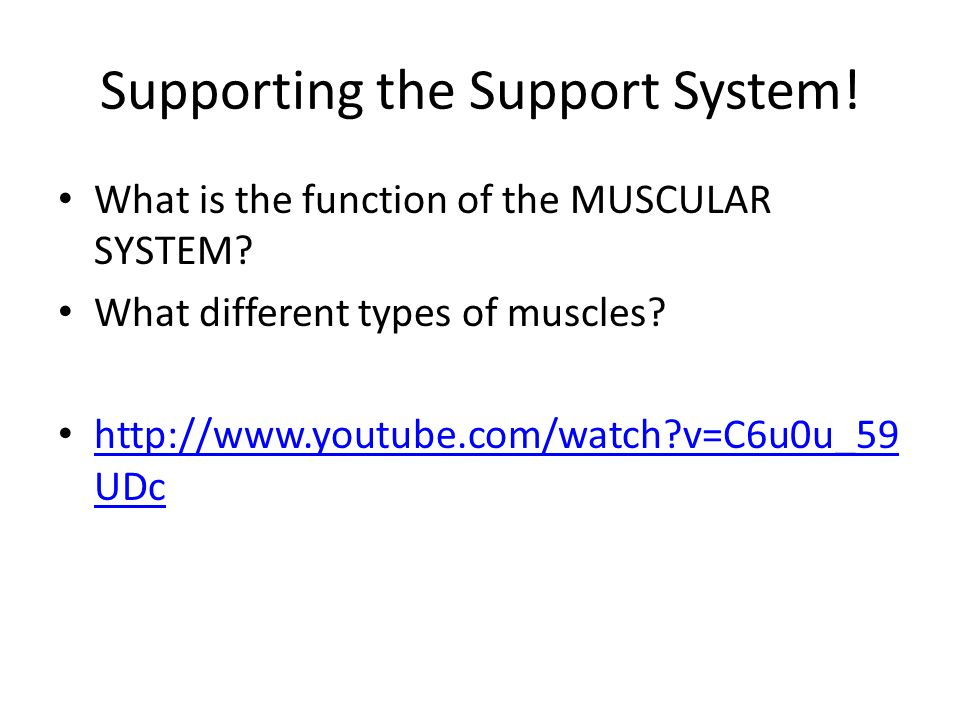Supporting the Support System. What is the function of the MUSCULAR SYSTEM.