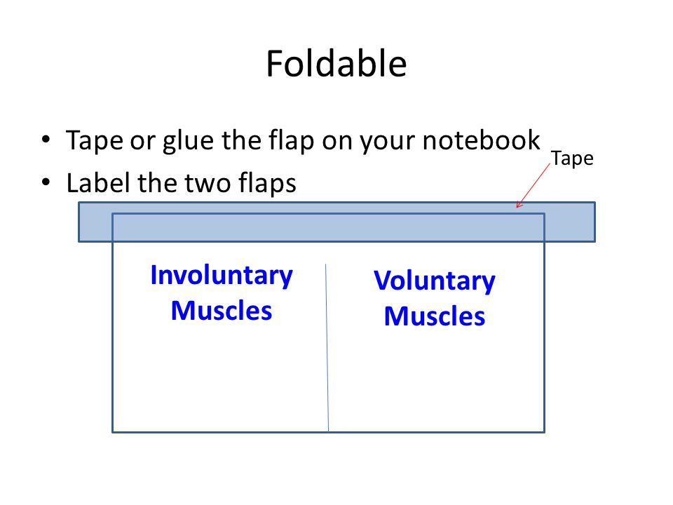 Foldable Tape or glue the flap on your notebook Label the two flaps Involuntary Muscles Voluntary Muscles Tape