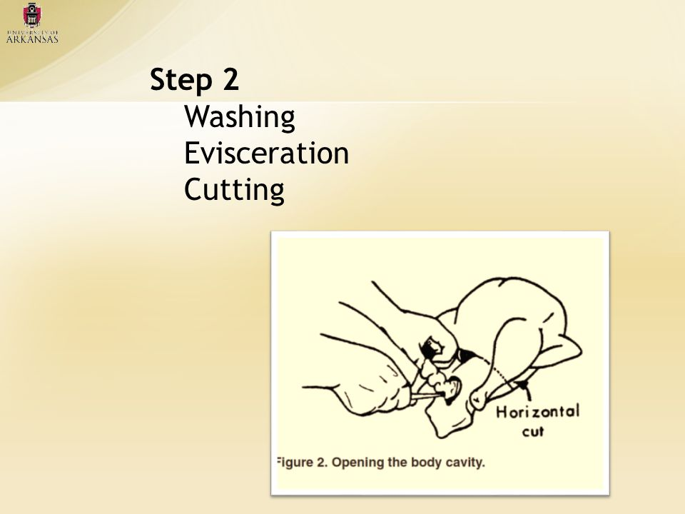Step 2 Washing Evisceration Cutting
