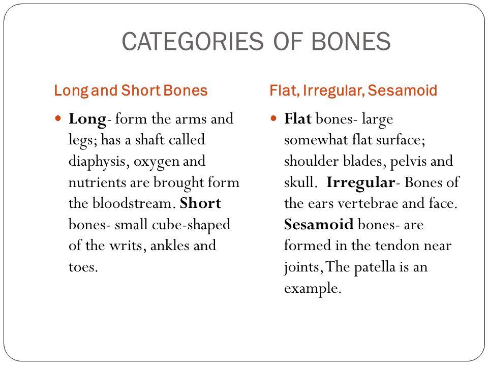 long bones Red Bone Marrow Yellow Bone Marrow Yellow marrow Contains mainly fat cells Red marrow Found in certain bones such as vertebrae, ribs, stern