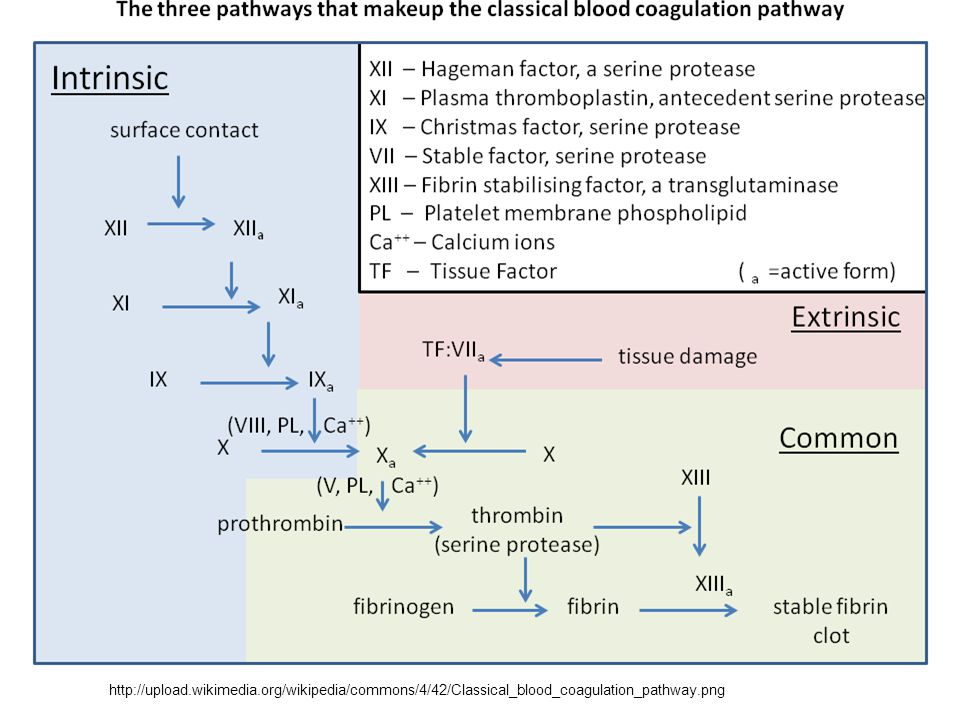 http://upload.wikimedia.org/wikipedia/commons/4/42/Classical_blood_coagulation_pathway.png