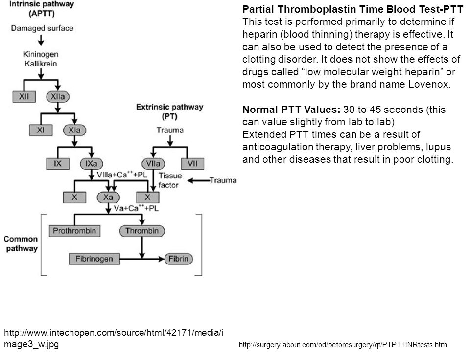 http://www.intechopen.com/source/html/42171/media/i mage3_w.jpg Partial Thromboplastin Time Blood Test-PTT This test is performed primarily to determi