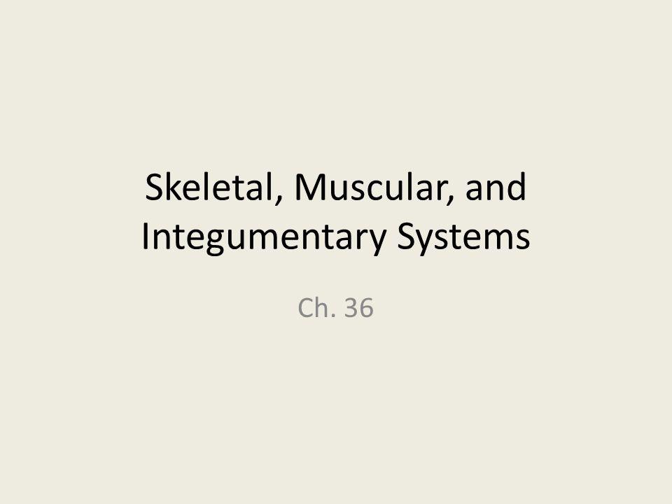 Skeletal System -The skeletal system has 206 living bones in the average human body.