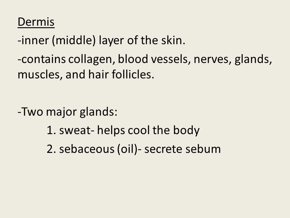 Dermis -inner (middle) layer of the skin. -contains collagen, blood vessels, nerves, glands, muscles, and hair follicles. -Two major glands: 1. sweat-