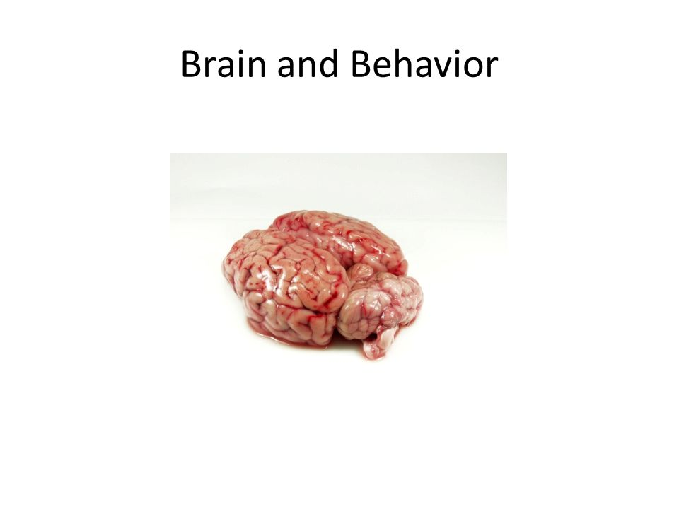 Brain and Behavior
