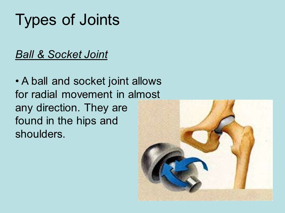 Types of Joints Ball & Socket Joint A ball and socket joint allows for radial movement in almost any direction. They are found in the hips and shoulde