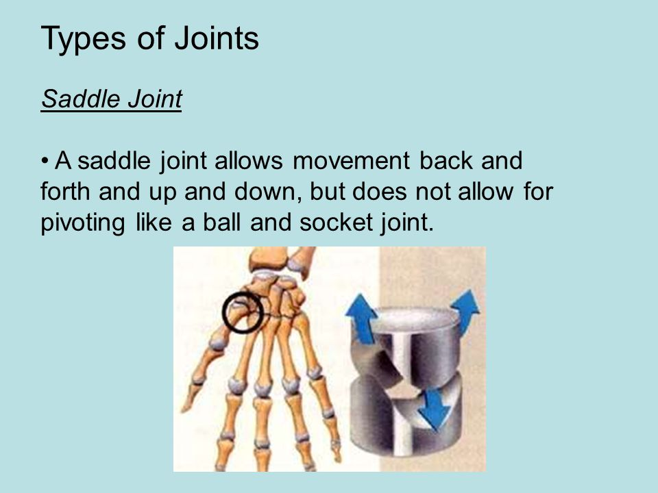 Types of Joints Saddle Joint A saddle joint allows movement back and forth and up and down, but does not allow for pivoting like a ball and socket joi