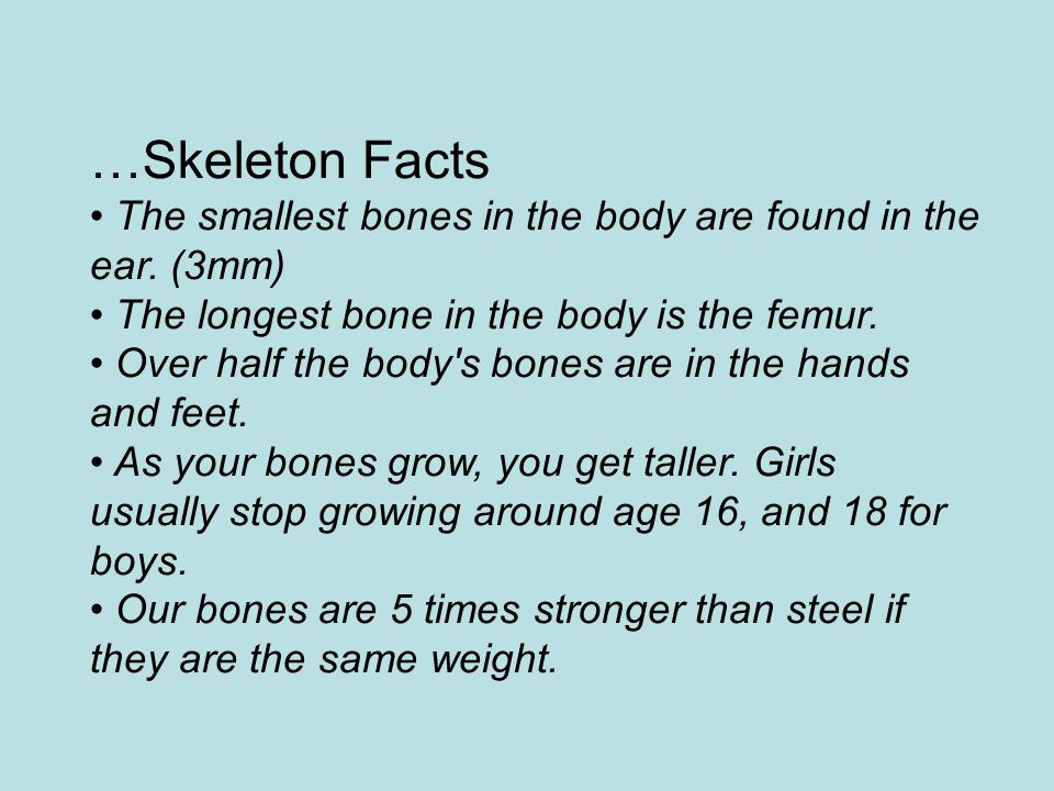 …Skeleton Facts The smallest bones in the body are found in the ear. (3mm) The longest bone in the body is the femur. Over half the body's bones are i