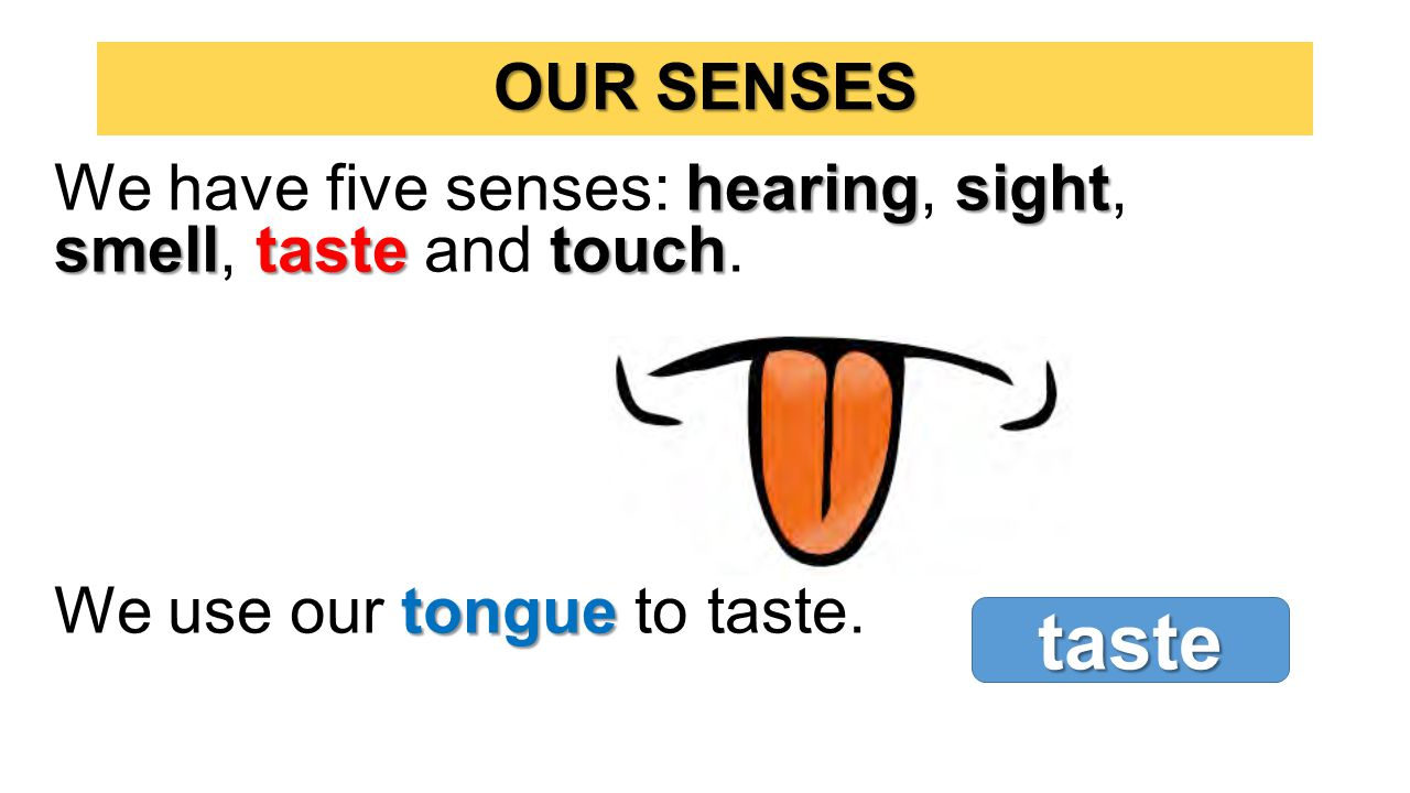 hearingsight smelltastetouch We have five senses: hearing, sight, smell, taste and touch. tongue We use our tongue to taste. OUR SENSES taste