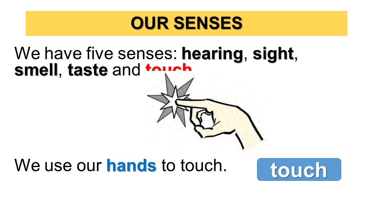 hearingsight smelltastetouch We have five senses: hearing, sight, smell, taste and touch.