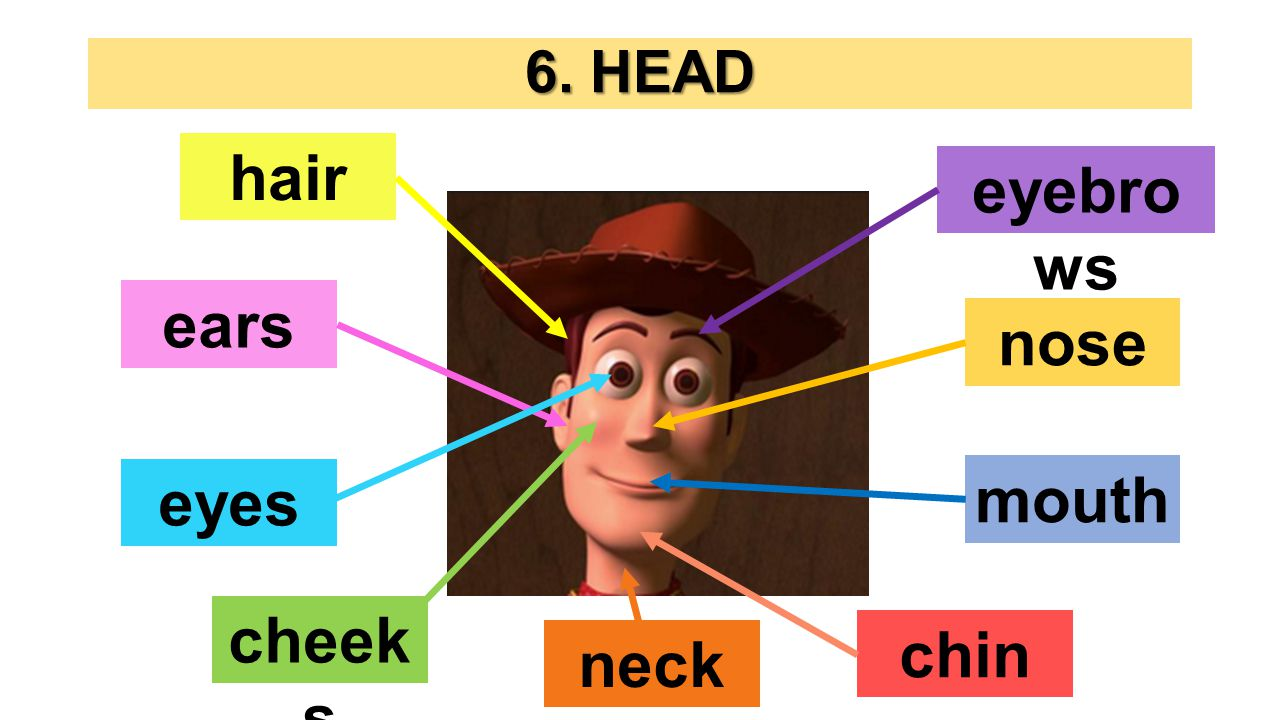 6. HEAD hair mouth eyes cheek s eyebro ws ears nose chin neck
