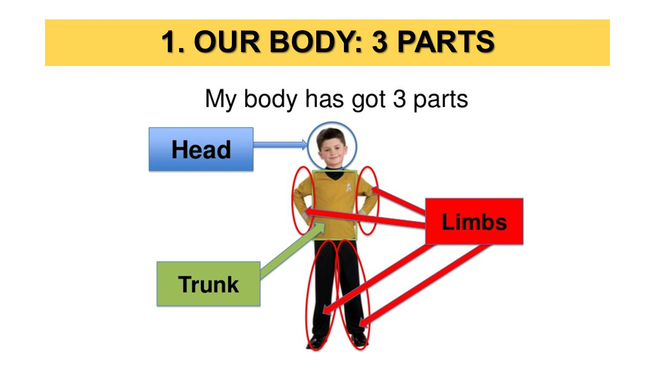 1. OUR BODY: 3 PARTS