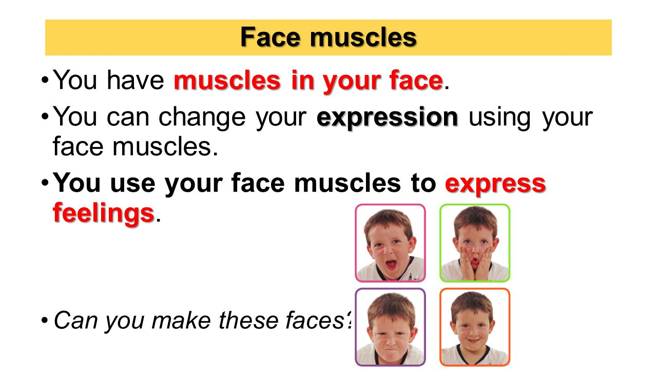 Face muscles muscles in your faceYou have muscles in your face.