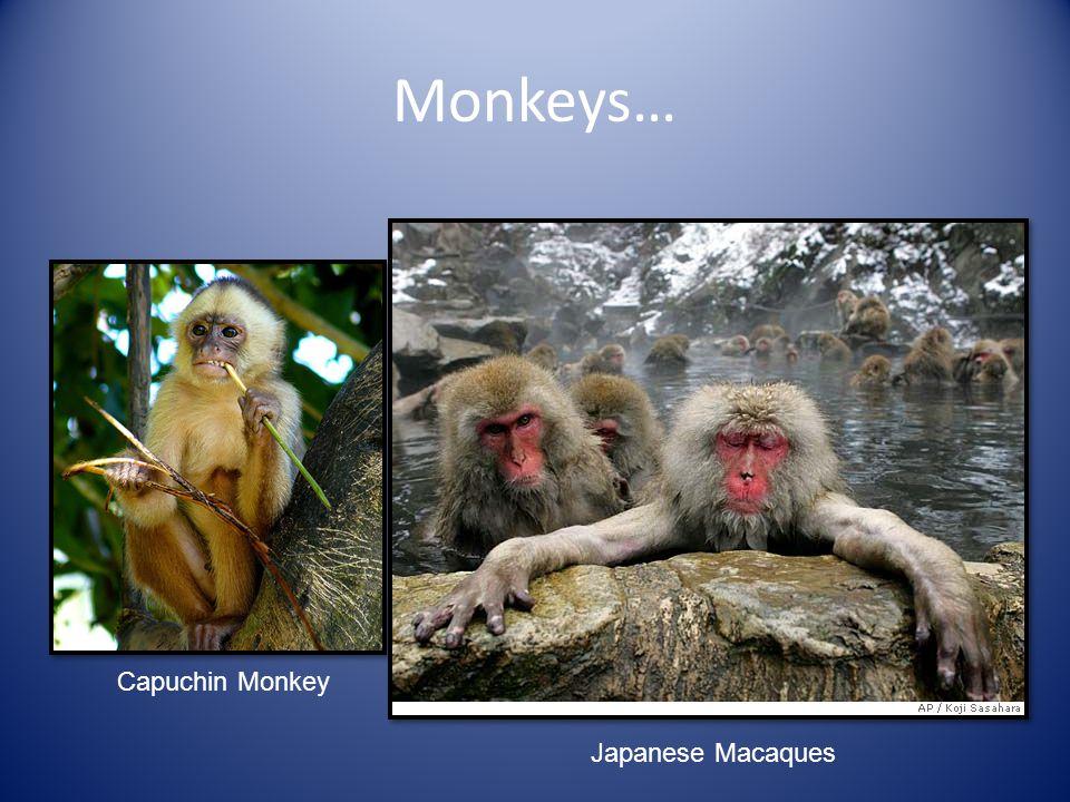 Monkeys… Capuchin Monkey Japanese Macaques