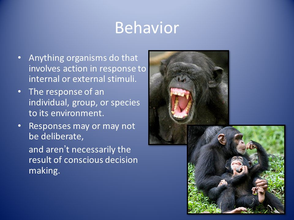 Behavior Anything organisms do that involves action in response to internal or external stimuli.