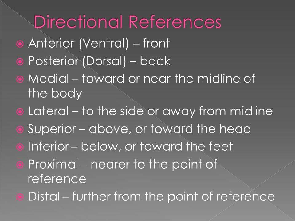  Anterior (Ventral) – front  Posterior (Dorsal) – back  Medial – toward or near the midline of the body  Lateral – to the side or away from midline  Superior – above, or toward the head  Inferior – below, or toward the feet  Proximal – nearer to the point of reference  Distal – further from the point of reference
