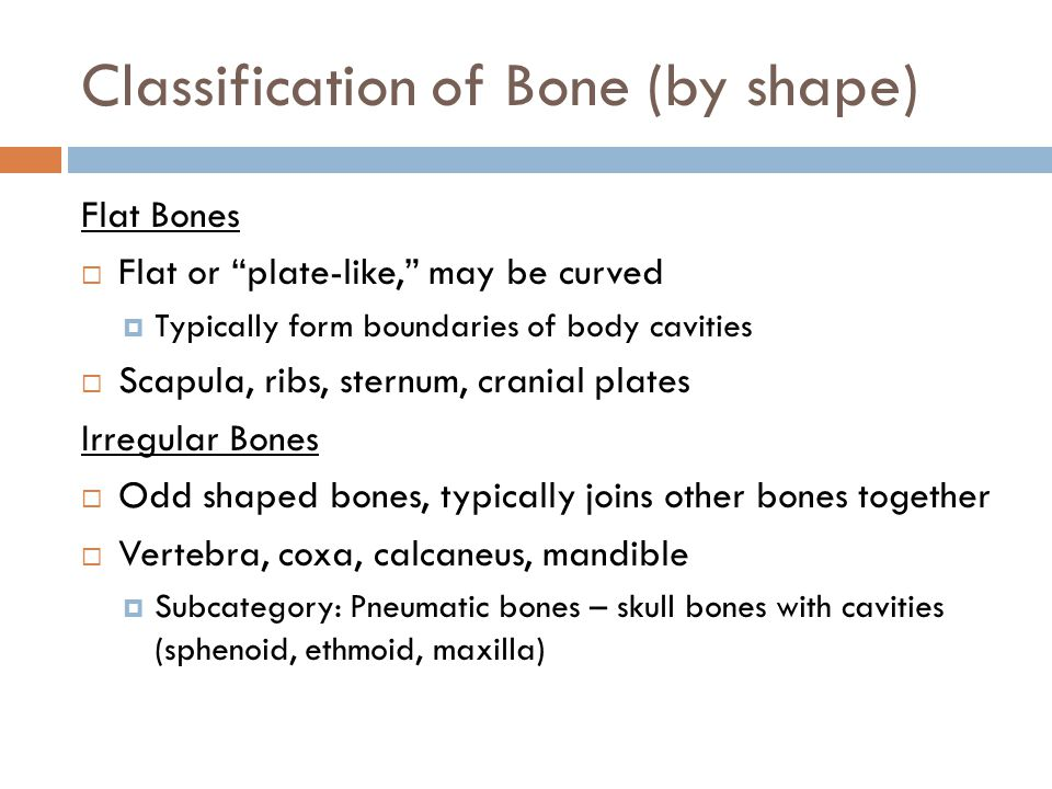 Classification of Bone (by shape) Flat Bones  Flat or plate-like, may be curved  Typically form boundaries of body cavities  Scapula, ribs, sternum, cranial plates Irregular Bones  Odd shaped bones, typically joins other bones together  Vertebra, coxa, calcaneus, mandible  Subcategory: Pneumatic bones – skull bones with cavities (sphenoid, ethmoid, maxilla)