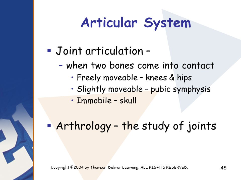 Copyright ©2004 by Thomson Delmar Learning. ALL RIGHTS RESERVED. 45 Articular System  Joint articulation – –when two bones come into contact Freely m