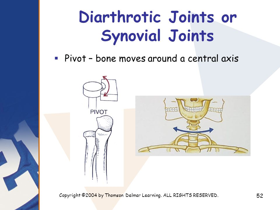 Copyright ©2004 by Thomson Delmar Learning. ALL RIGHTS RESERVED. 52 Diarthrotic Joints or Synovial Joints  Pivot – bone moves around a central axis
