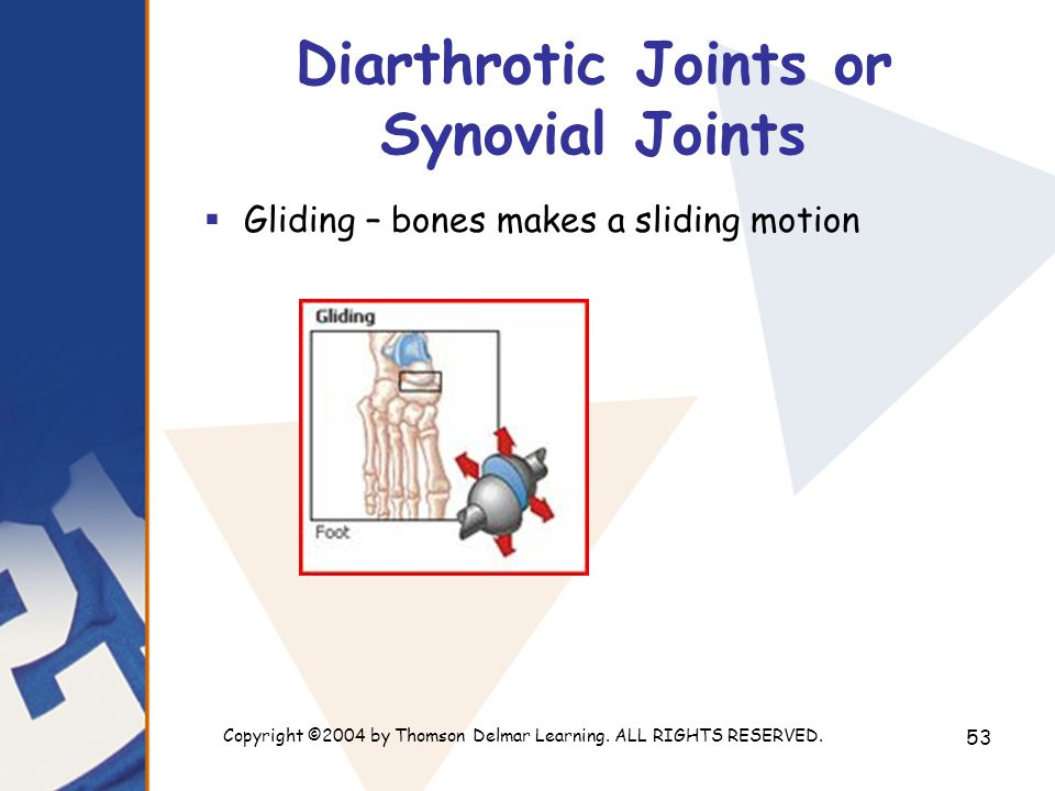 Copyright ©2004 by Thomson Delmar Learning. ALL RIGHTS RESERVED. 53 Diarthrotic Joints or Synovial Joints  Gliding – bones makes a sliding motion