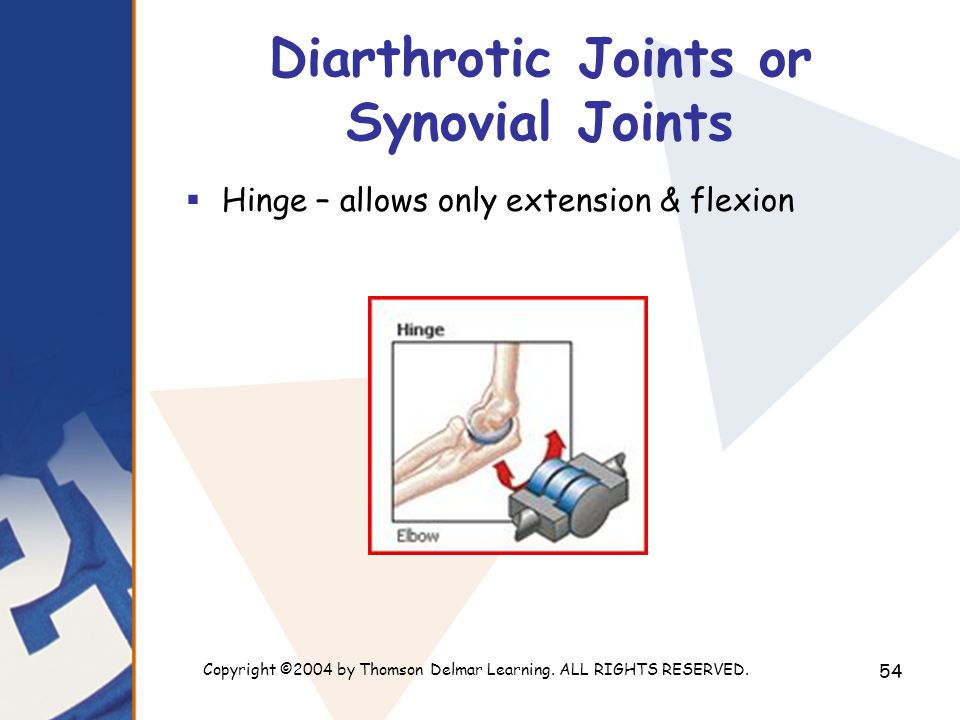 Copyright ©2004 by Thomson Delmar Learning. ALL RIGHTS RESERVED. 54 Diarthrotic Joints or Synovial Joints  Hinge – allows only extension & flexion
