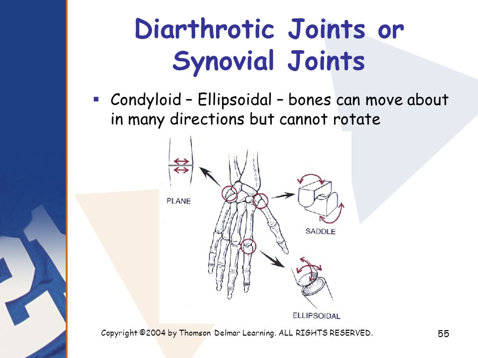 Copyright ©2004 by Thomson Delmar Learning. ALL RIGHTS RESERVED. 55 Diarthrotic Joints or Synovial Joints  Condyloid – Ellipsoidal – bones can move a