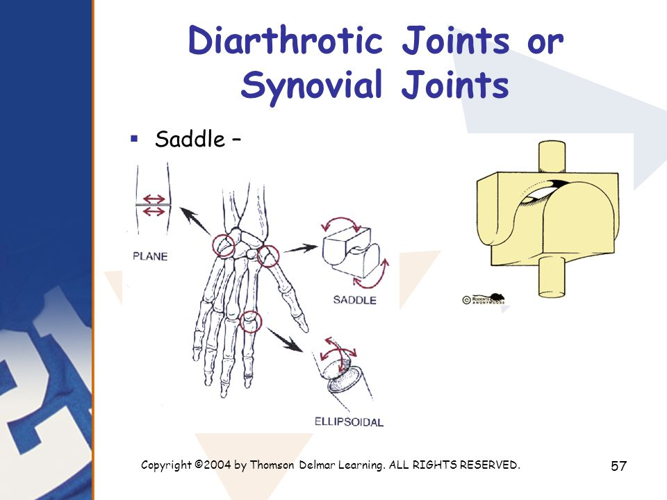Copyright ©2004 by Thomson Delmar Learning. ALL RIGHTS RESERVED. 57 Diarthrotic Joints or Synovial Joints  Saddle –