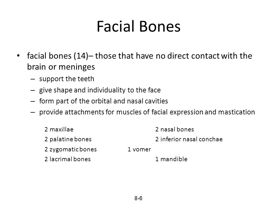 Facial Bones facial bones (14)– those that have no direct contact with the brain or meninges – support the teeth – give shape and individuality to the
