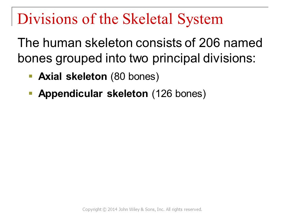 The human skeleton consists of 206 named bones grouped into two principal divisions:  Axial skeleton (80 bones)  Appendicular skeleton (126 bones) D