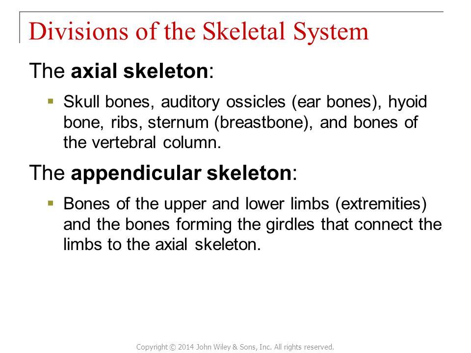 The axial skeleton:  Skull bones, auditory ossicles (ear bones), hyoid bone, ribs, sternum (breastbone), and bones of the vertebral column. The appen