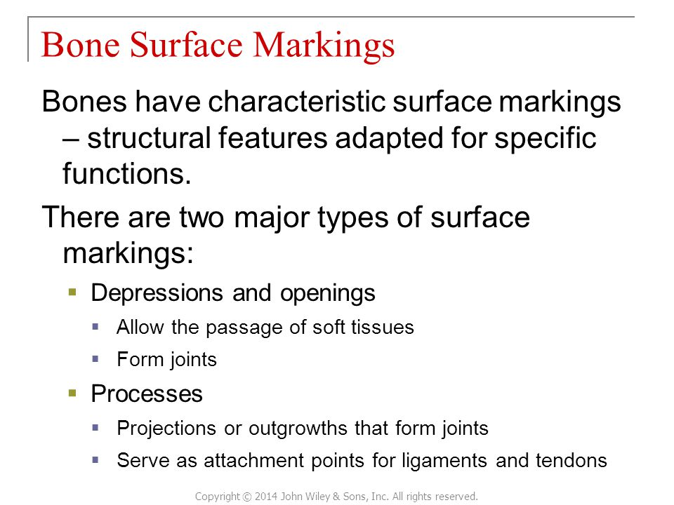 Bones have characteristic surface markings – structural features adapted for specific functions. There are two major types of surface markings:  Depr