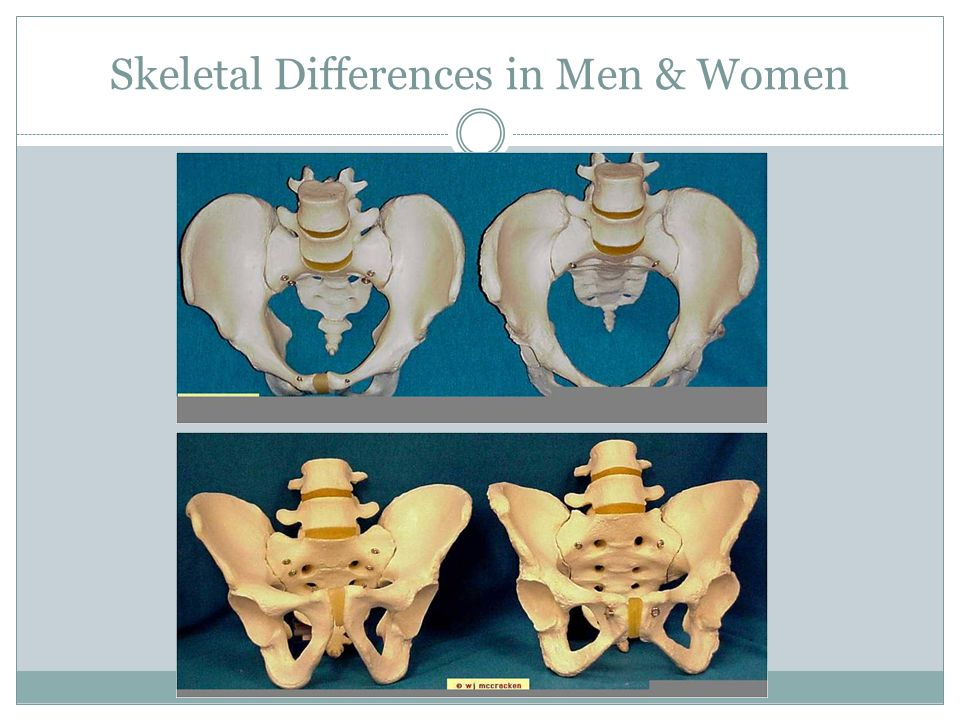 Skeletal Differences in Men & Women