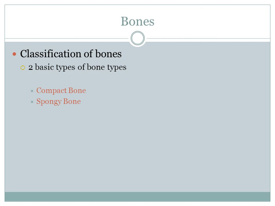 Bones Classification of bones  2 basic types of bone types  Compact Bone  Spongy Bone