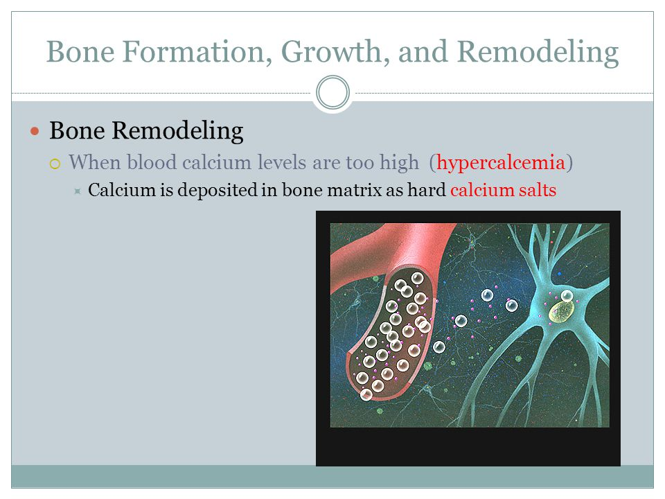 Bone Formation, Growth, and Remodeling Bone Remodeling  When blood calcium levels are too high (hypercalcemia)  Calcium is deposited in bone matrix