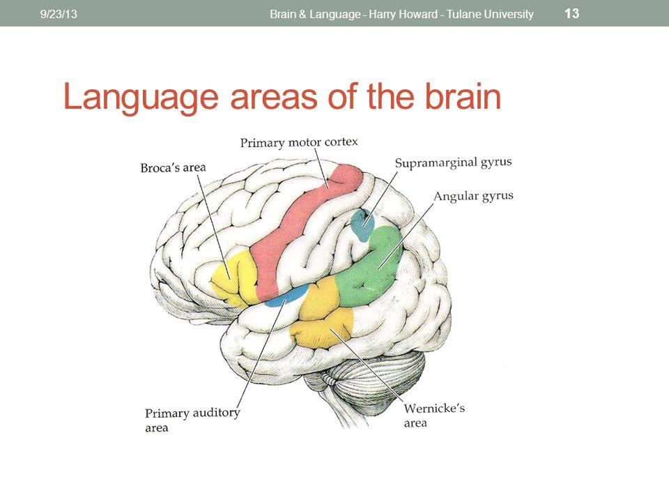 9/23/13Brain & Language - Harry Howard - Tulane University 13 Language areas of the brain