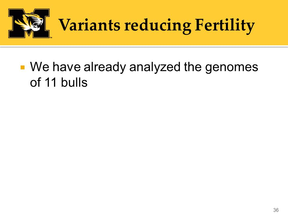  We have already analyzed the genomes of 11 bulls 36