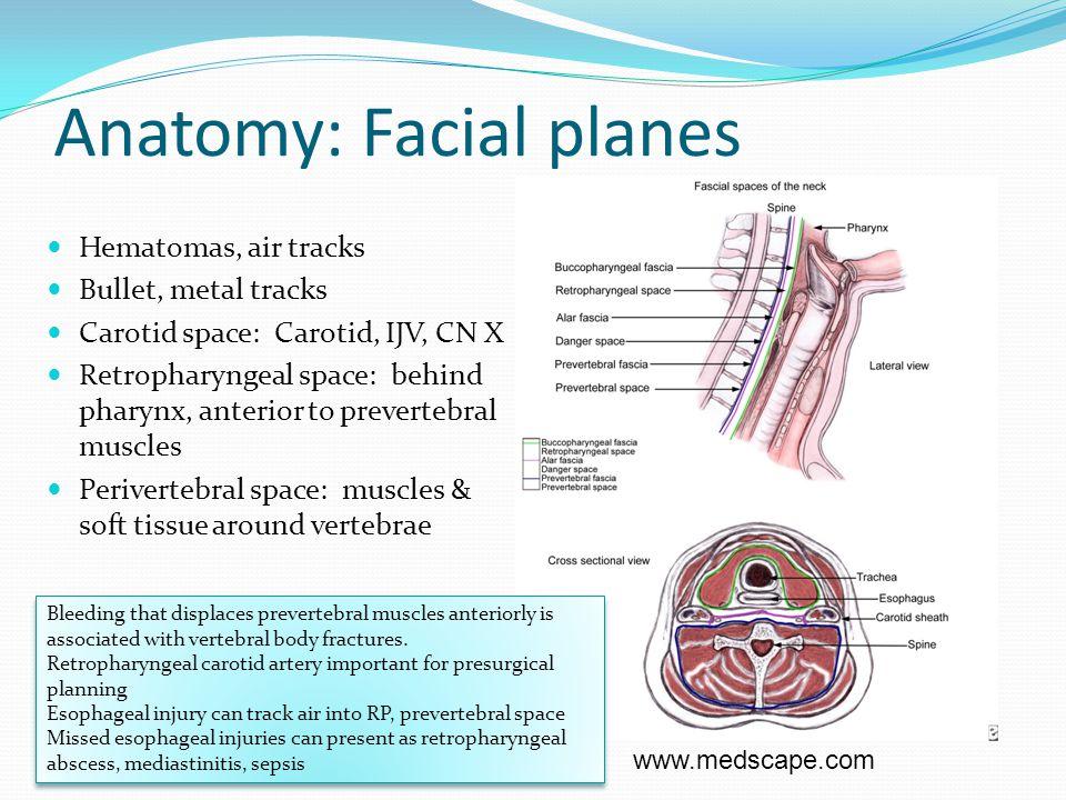 Anatomy: Facial planes Hematomas, air tracks Bullet, metal tracks Carotid space: Carotid, IJV, CN X Retropharyngeal space: behind pharynx, anterior to