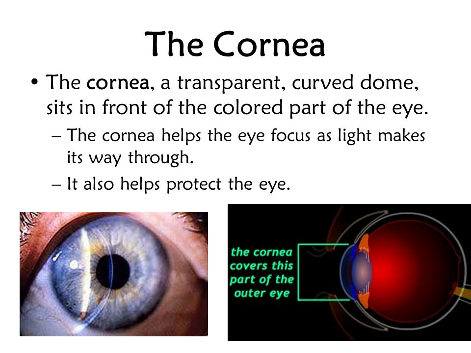 Behind the cornea are the iris and the pupil.The iris is the colorful part of the eye.
